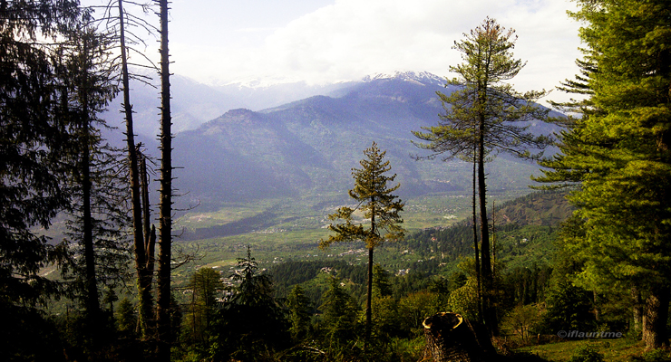 scenery with trees at Naggar